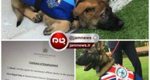 اخراج یک سگ از اداره پلیس به علت مهربان بودن