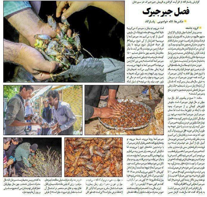 www.dustaan.com فروش «جیرجیرک سرخ شده» در برخی از استان های کشور +عکس