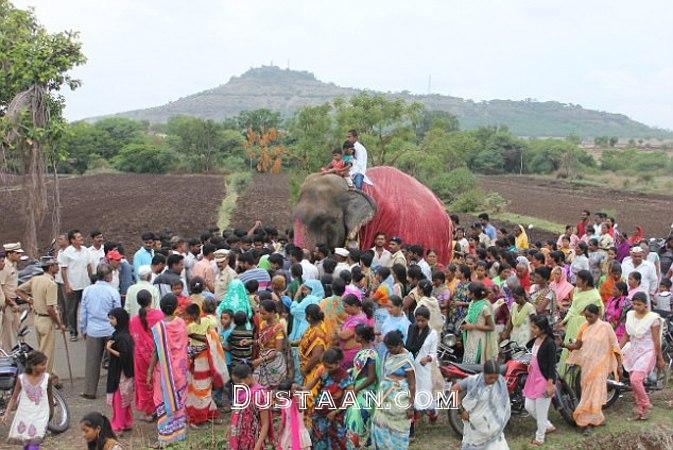 www.dustaan.com آزادی فیل پس از 50 سال اسارت در معبد هندوها! +عکس