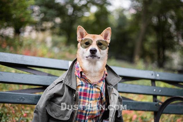 www.dustaan.com سگ مُدلی که در ماه 50 میلیون تومان درآمد دارد! +تصاویر