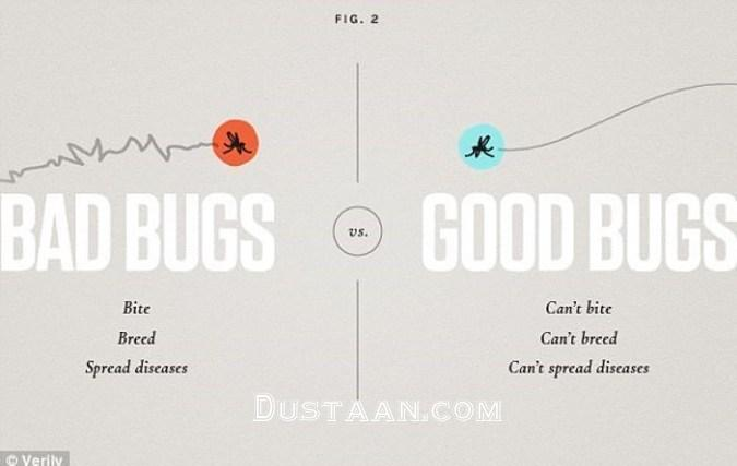 www.dustaan.com مبارزه با حشرات مضر به سبک گوگل! +تصاویر