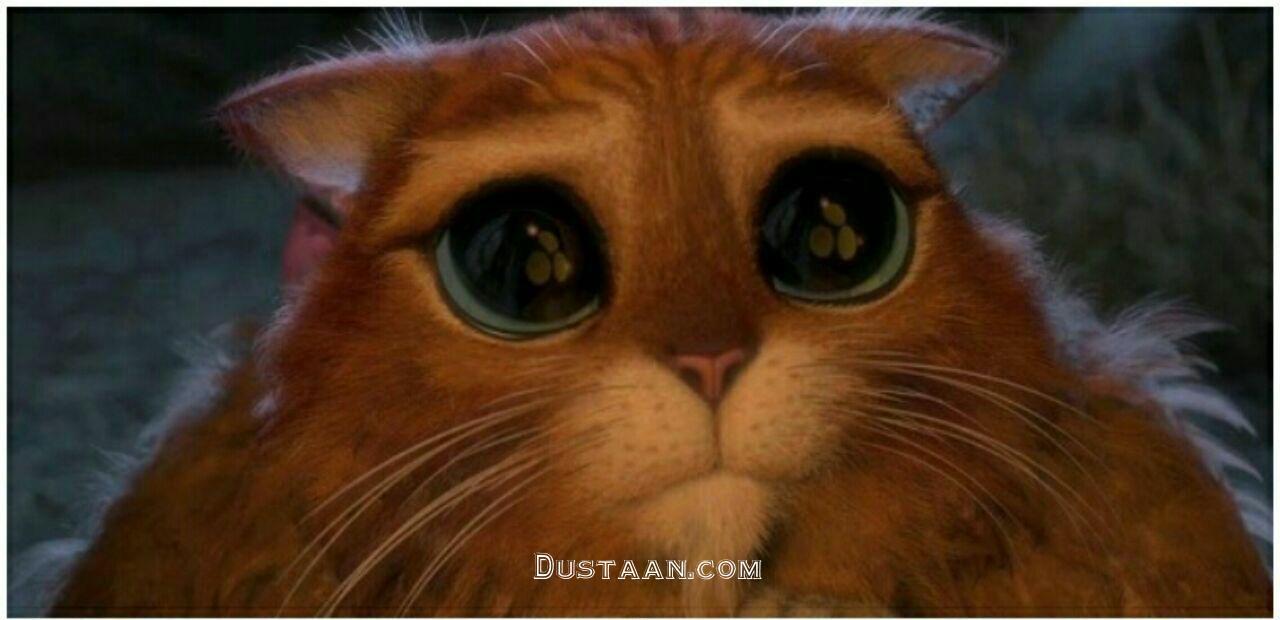 www.dustaan.com گربه چکمه پوش دنیای واقعی! +عکس