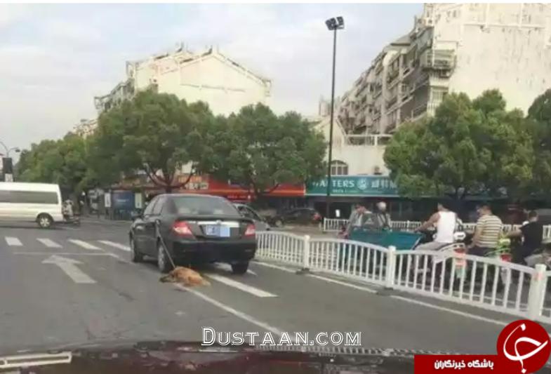 www.dustaan.com شکنجه دردناک یک سگ، خشم مردم را برانگیخت +عکس