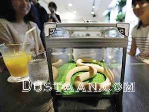 www.dustaan.com کافی شاپ مخصوص مارها در ژاپن! +عکس