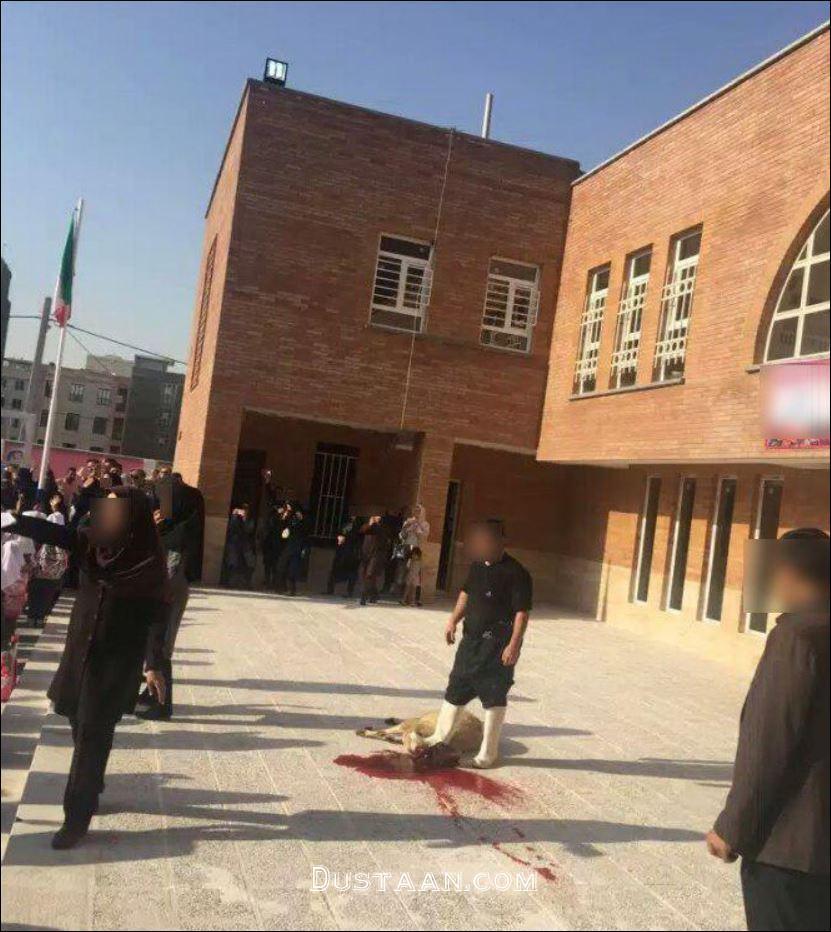 www.dustaan.com قربانی کردن گوسفند در اولین روز مدرسه! +عکس