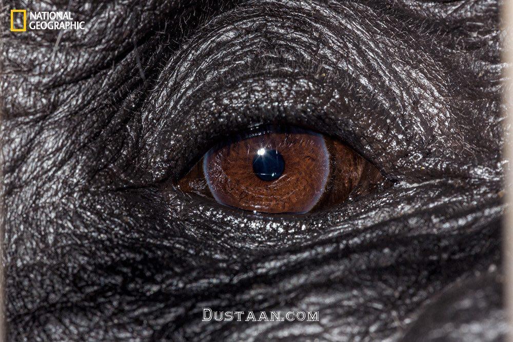 www.dustaan.com چشم های حیوانات از نمایی بسیار نزدیک! +تصاویر