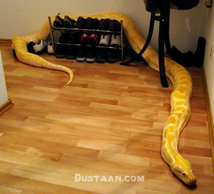 www.dustaan.com وقتی مار و مارمولک حیوان خانگی می شود! +عکس