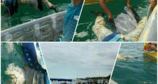 کشف جنازه خلبان گمشده پس از ۹ ماه در ساحل نکا