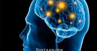 https://www.digikala.com/mag/wp-content/uploads/2016/01/human-brain1.jpg