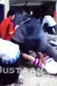 www.dustaan.com حمله فیل خشمگین به ۲ گردشگر ایرانی در تایلند!