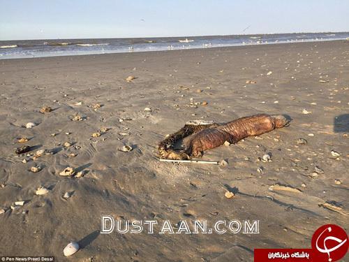 www.dustaan.com کشف موجودی عجیب الخلقه در سواحل تگزاس +تصاویر