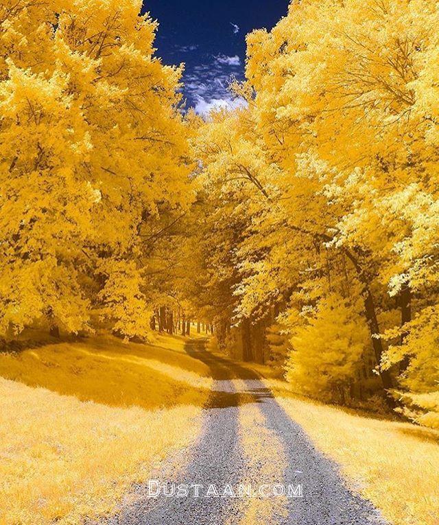زیباترین تصویر از فصل پاییز! - مجله اینترنتی دوستان