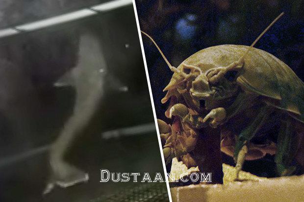 www.dustaan.com موجودی وحشتناک، که قاتل کوسه هاست! +عکس
