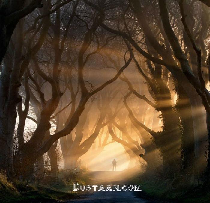 www.dustaan.com عجیب ترین درخت هایی که تاکنون دیده اید! +تصاویر