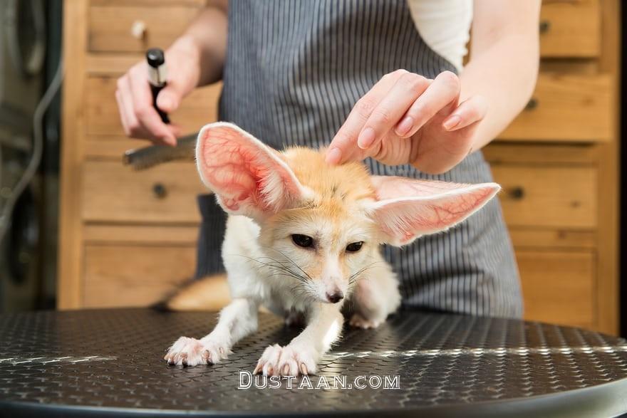 www.dustaan.com علاقه چینی ها به حیوانات عجیب خانگی +تصاویر