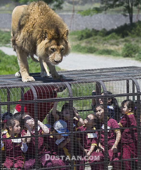 www.dustaan.com در این باغ وحش انسان ها در قفس هستند! +عکس
