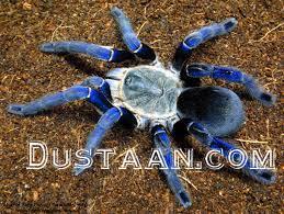 www.dustaan.com حیوان لاکچری خانگی اما بسیار خطرناک! +عکس