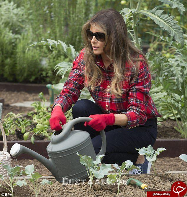 www.dustaan.com تیپ لاکچری ملانیا ترامپ هنگام باغبانی + تصاویر