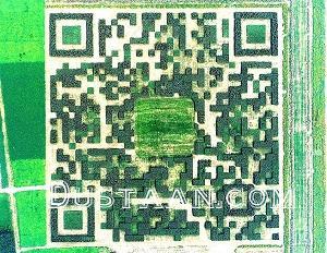 www.dustaan.com ساخت بزرگترین بارکد جهان با درختان! +عکس