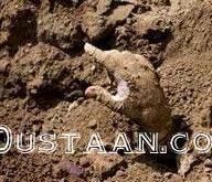 مردی که زنده از قبر بیرون آمد +فیلم