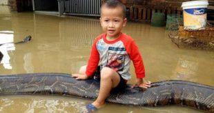 سواری گرفتن کودک ۳ ساله از مار پیتون ۶ متری در حیاط خانه +تصاویر