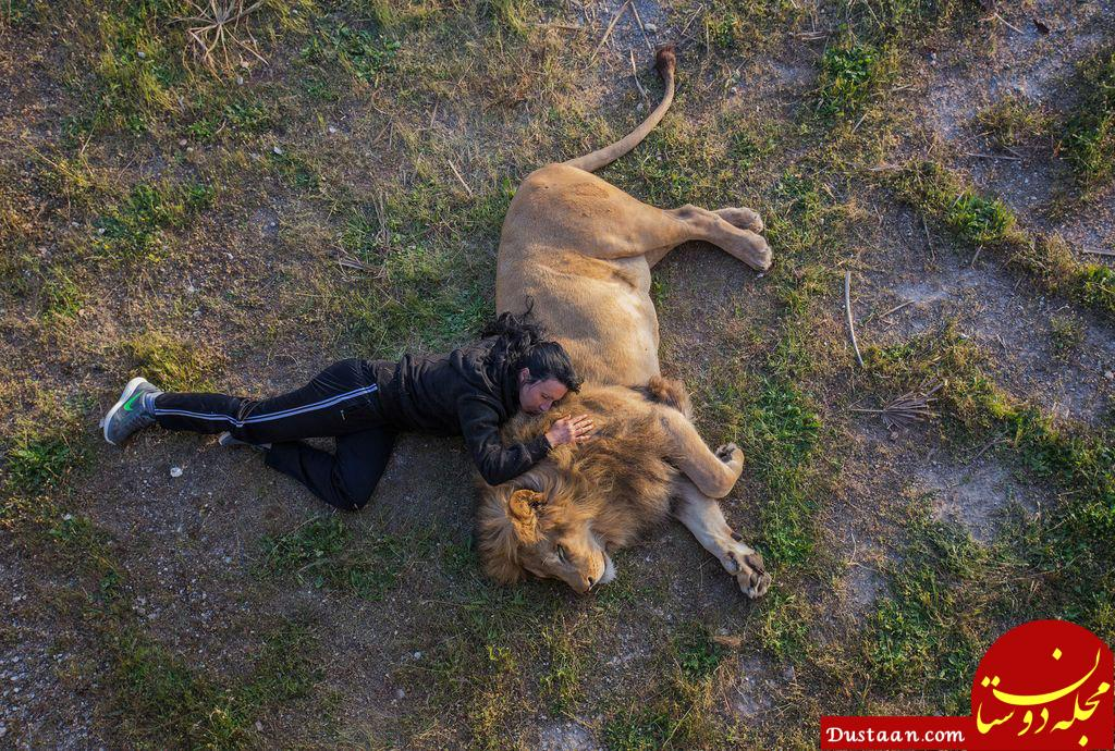 www.dustaan.com هم خوابی عجیب دختر جوان با یک شیر! +عکس