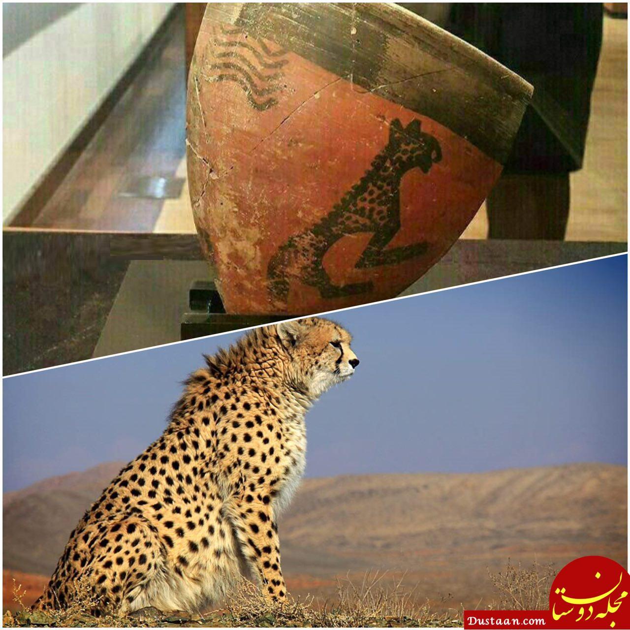 www.dustaan.com تصویر 8 هزار ساله از یوزپلنگ ایرانی! +عکس