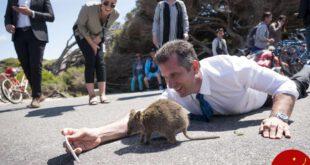 سلفی عجیب وزیر استرالیا با یک کوئوکا! +عکس