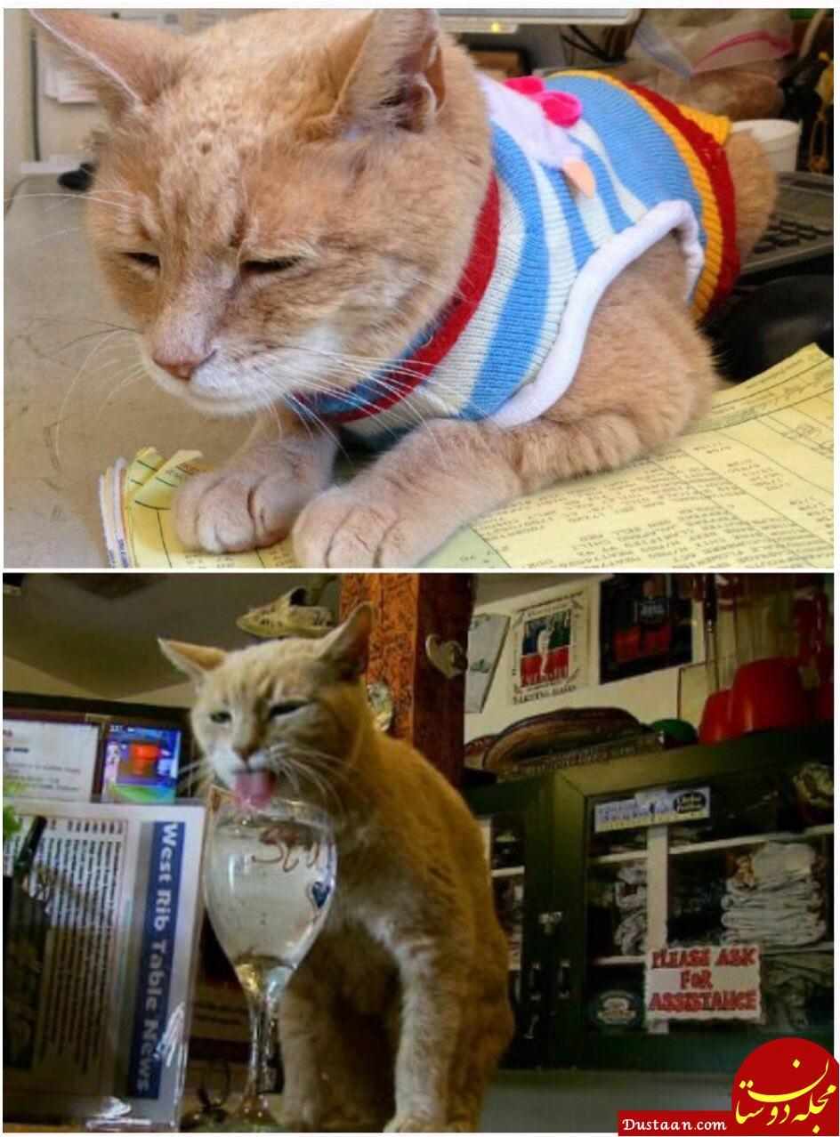 www.dustaan.com گربه ای که 15 سال شهردار آمریکا بود! +عکس
