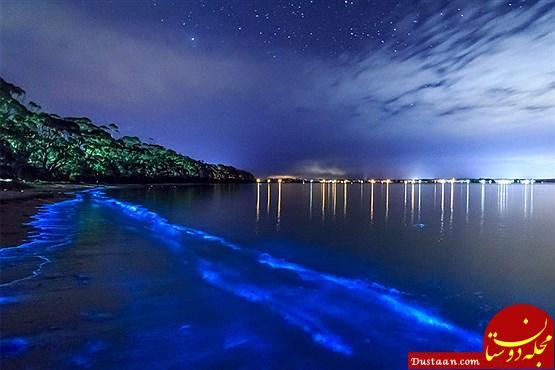 www.dustaan.com همه چیز درباره خلیج ماسکیتو در پورتوریکو +تصاویر