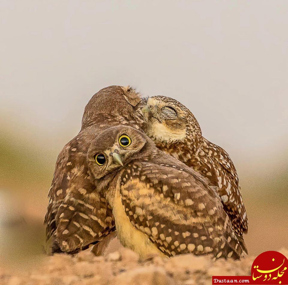 www.dustaan.com - تصاویری بسیار زیبا و دیدنی از دنیای حیوانات (آبان 96)