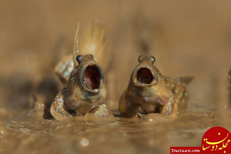 www.dustaan.com تصاویری بسیار زیبا و دیدنی از دنیای حیوانات (آبان 96)