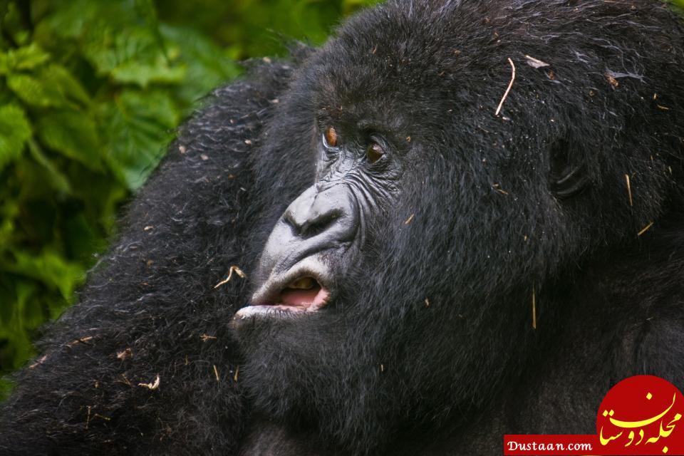 اخبار گوناگون ,خبرهای  گوناگون,  کمدی در دنیای حیوانات