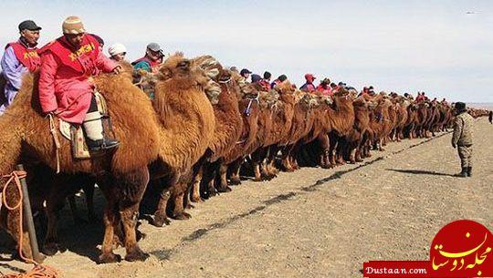 www.dustaan.com عجیب ترین رکورد های ثبت شده در گینس را بشناسید +عکس