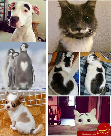 www.dustaan.com حیواناتی با طرح های عجیب بر روی بدنشان! +عکس