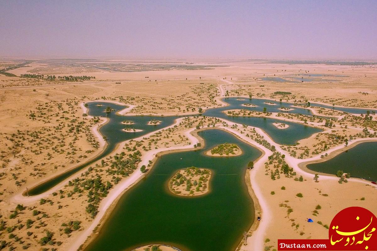 www.dustaan.com دریاچه دست ساز دبی میزبان صدها پرنده مهاجر! +عکس