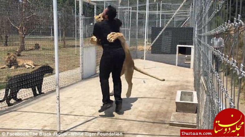 www.dustaan.com واکنش عجیب شیر وحشی در دیدار با صاحب قبلی اش! +تصاویر