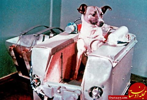 www.dustaan.com اولین سگی که به فضا شلیک شد! +عکس