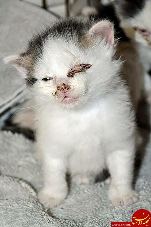 سگی که از گربهها متنفر بود پرستار یک بچه گربه شد + تصاویر