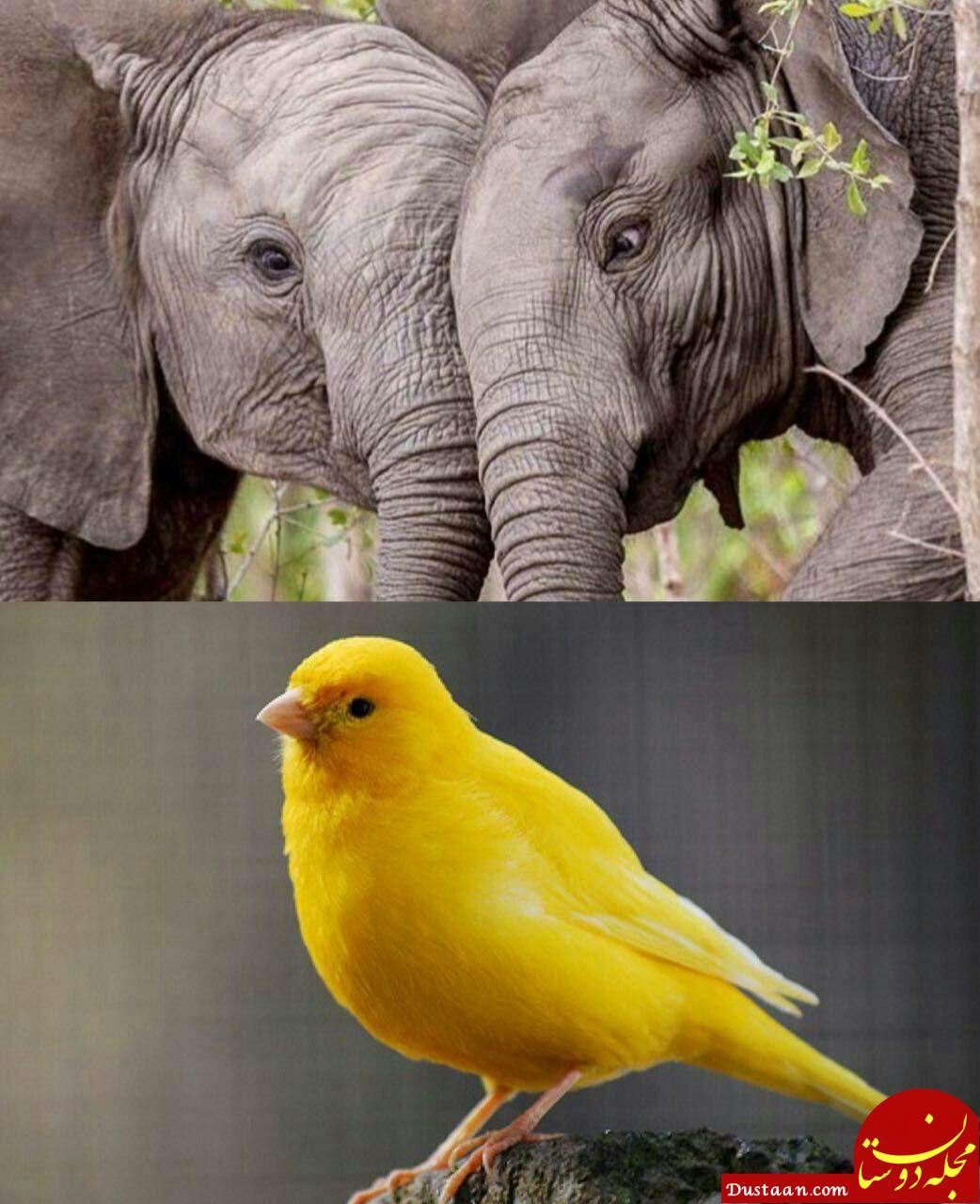 کدام حیوان بیشتر ضربان قلب دارد