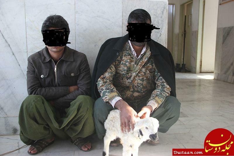 www.dustaan.com کشف 15 کیلوگرم تریاک از معده 3 گوسفند در زابل! +عکس