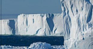 قطب شمال و جنوب چه تفاوت هایی با هم دارند؟