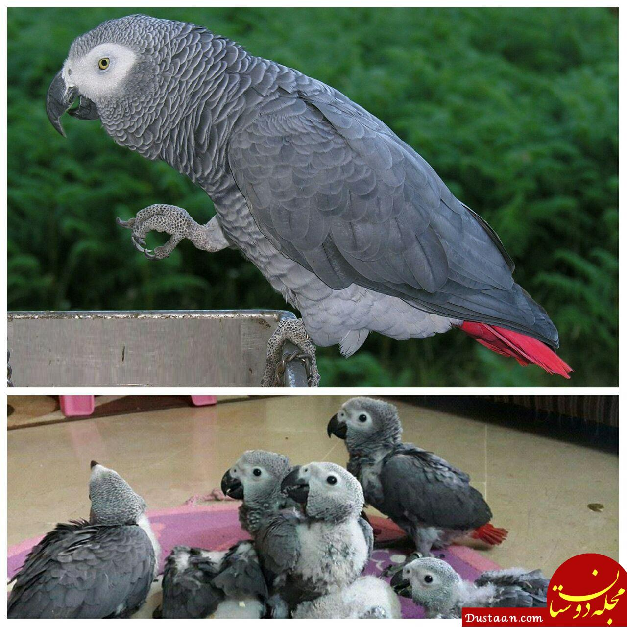 www.dustaan.com اگر با ناز و عشوه حرف بزند 7 میلیون تومان! +عکس