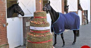 اخبار,اخبارگوناگون,جشن تولد اسب های گران قیمت