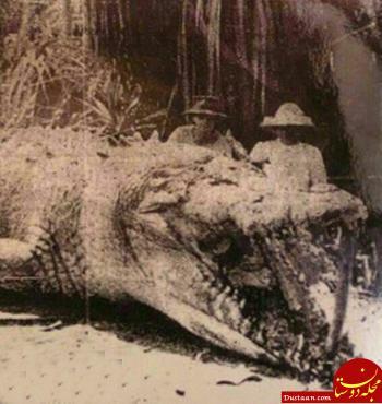www.dustaan.com شکار تمساح غول پیکر 8 متری در استرالیا! +عکس