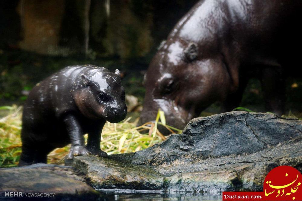 www.dustaan.com عکس های زیبا از حیوانات تازه متولد شده باغ وحش سنگاپور