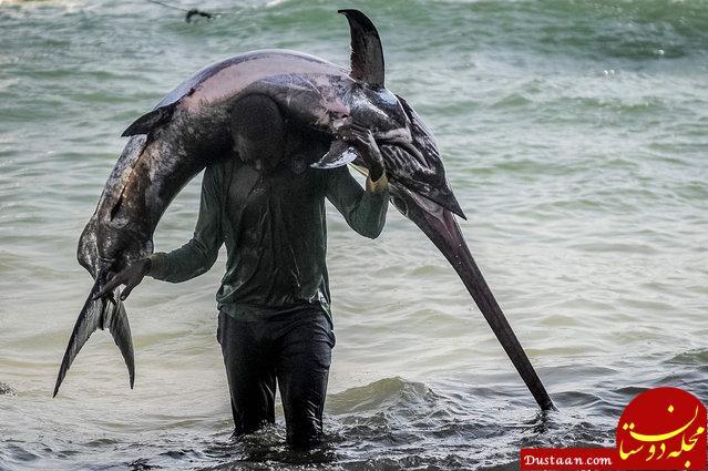 www.dustaan.com صید ماهی غول پیکر توسط ماهیگیر سومالیایی! +عکس