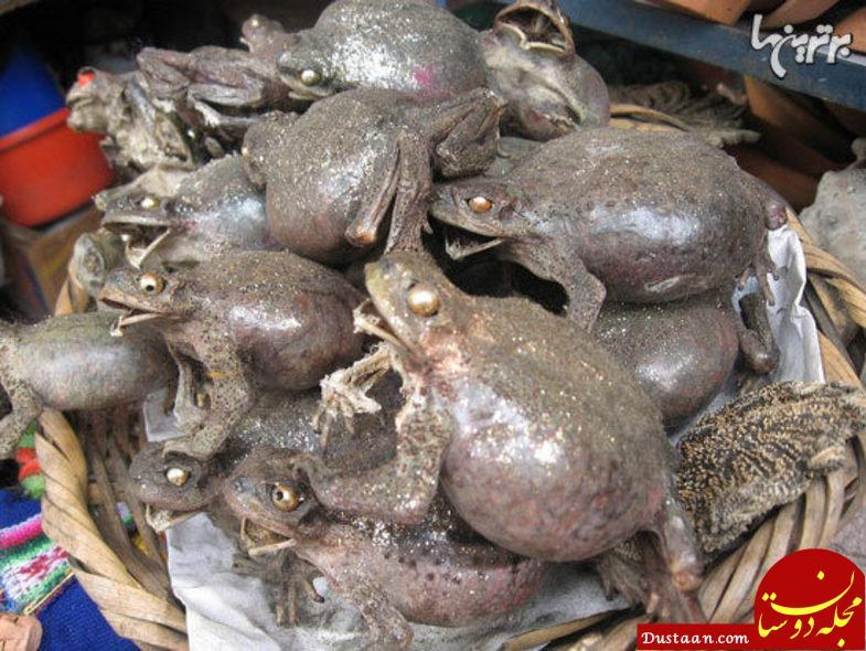 www.dustaan.com تصاویری جالب از بازار عجیب جادوگران در بولیوی!