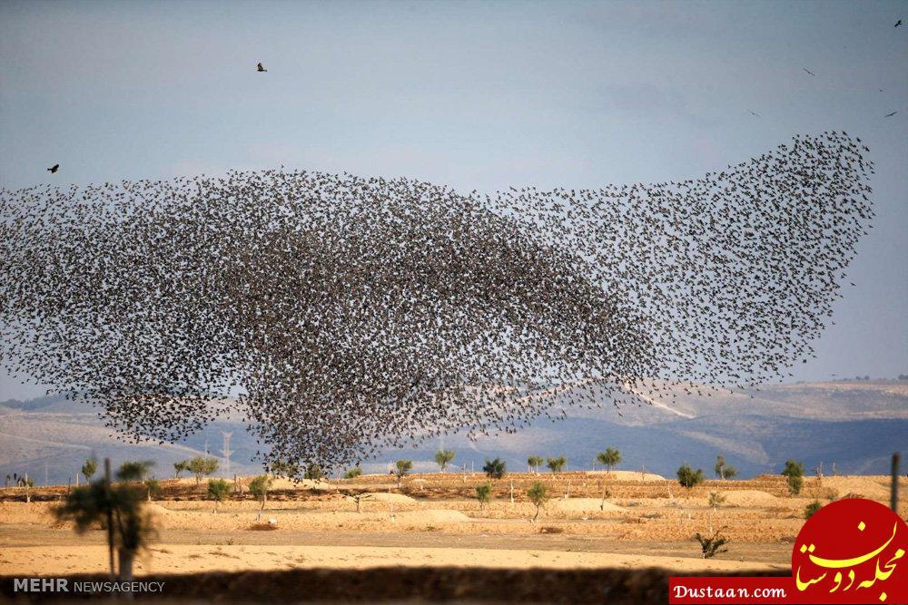 www.dustaan.com تصاویری بسیار زیبا از پرواز سارها در آسمان