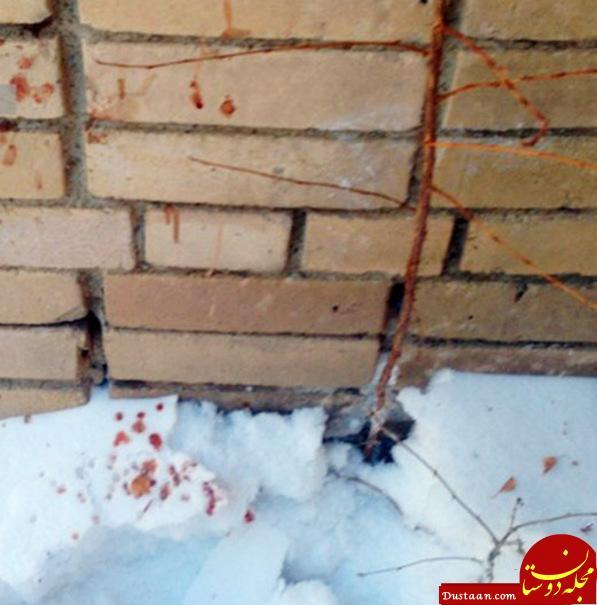 www.dustaan.com حمله وحشیانه نوجوان تبر به دست به دانش آموزان یک مدرسه +فیلم و عکس
